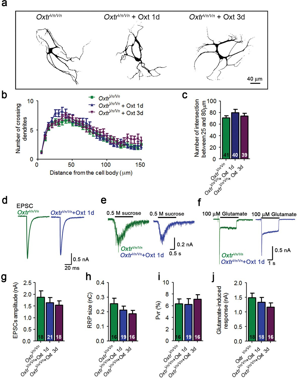 Transient oxytocin signaling primes the development and