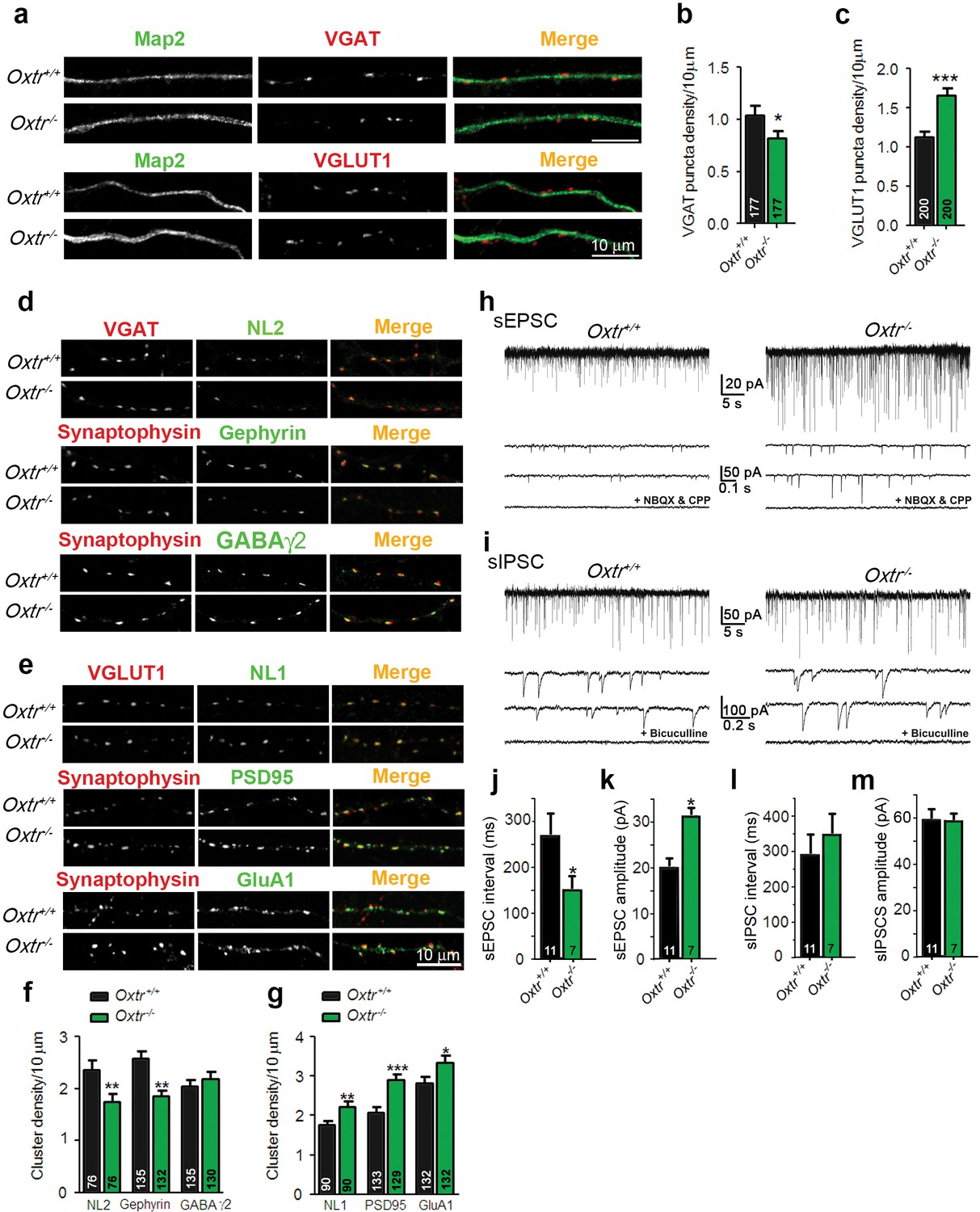 Transient Oxytocin Signaling Primes The Development And Function Of Snap Circuits Extreme Educational 750 Exp Hippocampal Cultures From Oxtr Mice Show An Increased Excitation Inhibition Balance