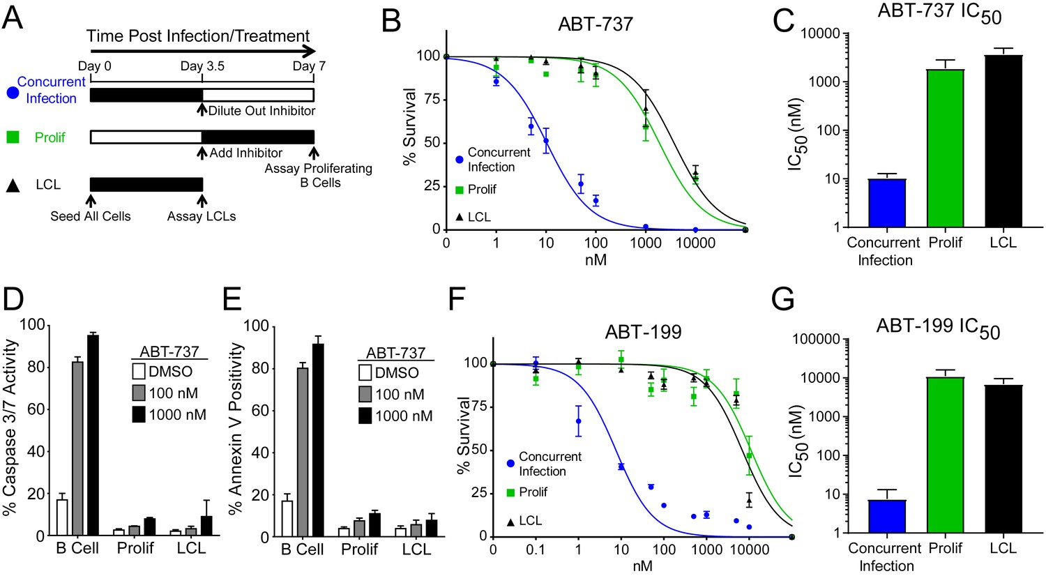 Epstein-Barr virus ensures B cell survival by uniquely