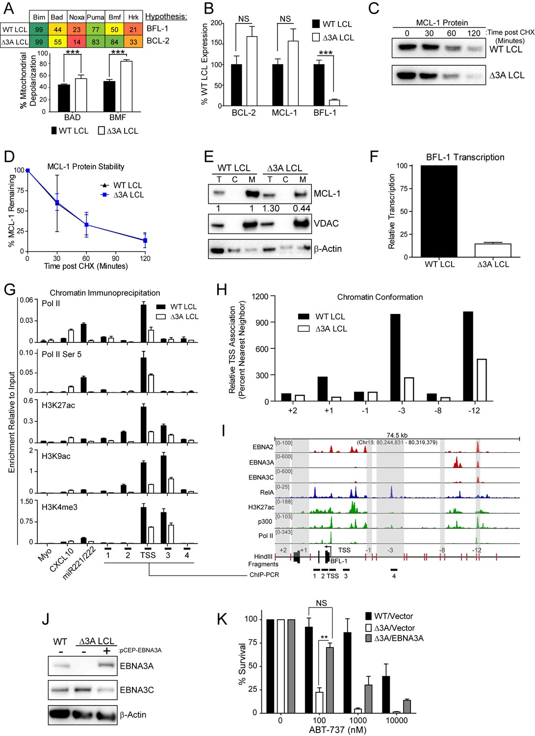 Figures and data in Epstein-Barr virus ensures B cell
