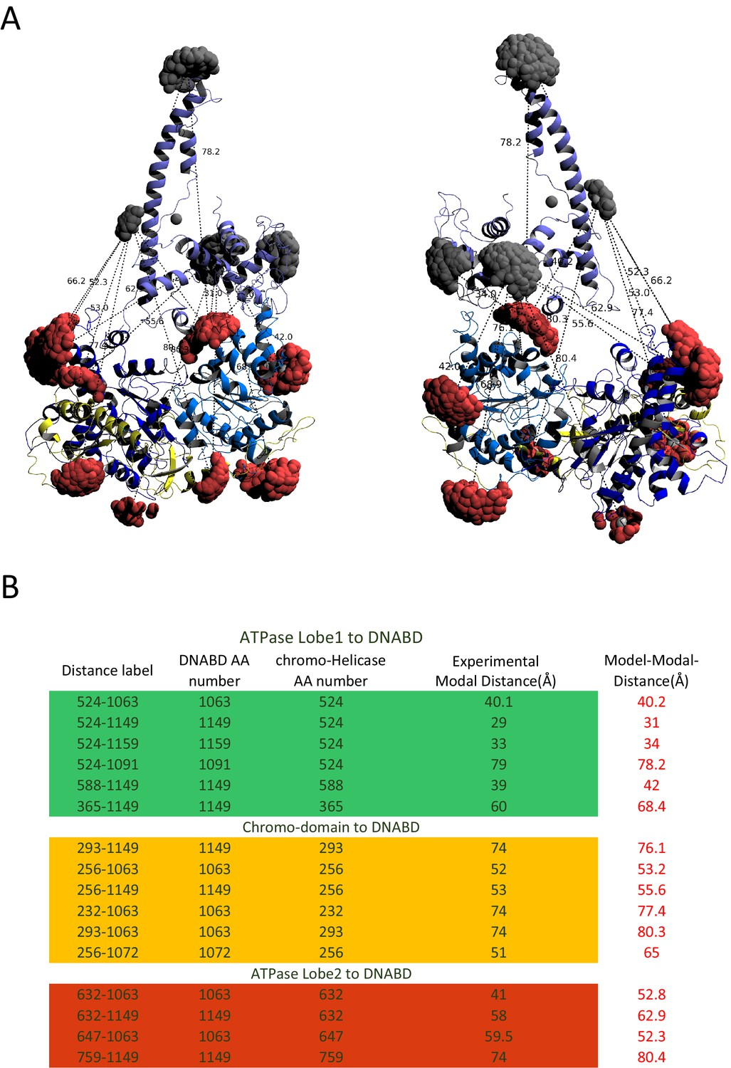 Structural reorganization of the chromatin remodeling enzyme Chd1 ...