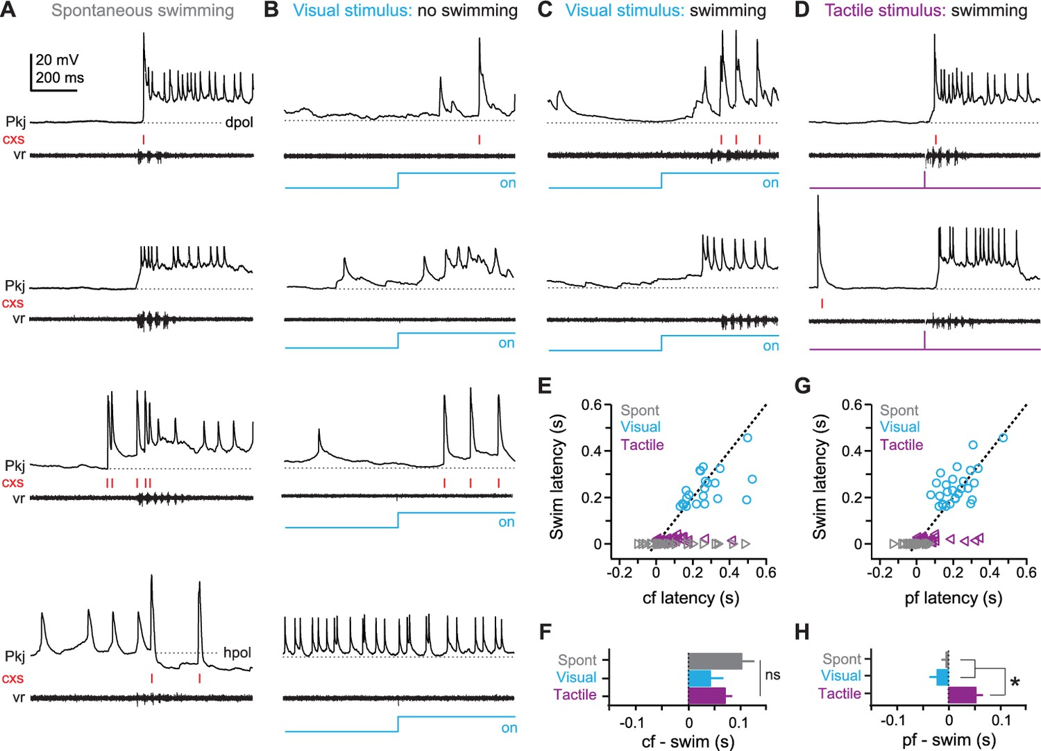 Distinct Responses Of Purkinje Neurons And Roles Simple Spikes Fish Foil Circuits Series Parallel Schematics Cell During Sensory Stimuli Motor Commands Associated With Fictive Swimming