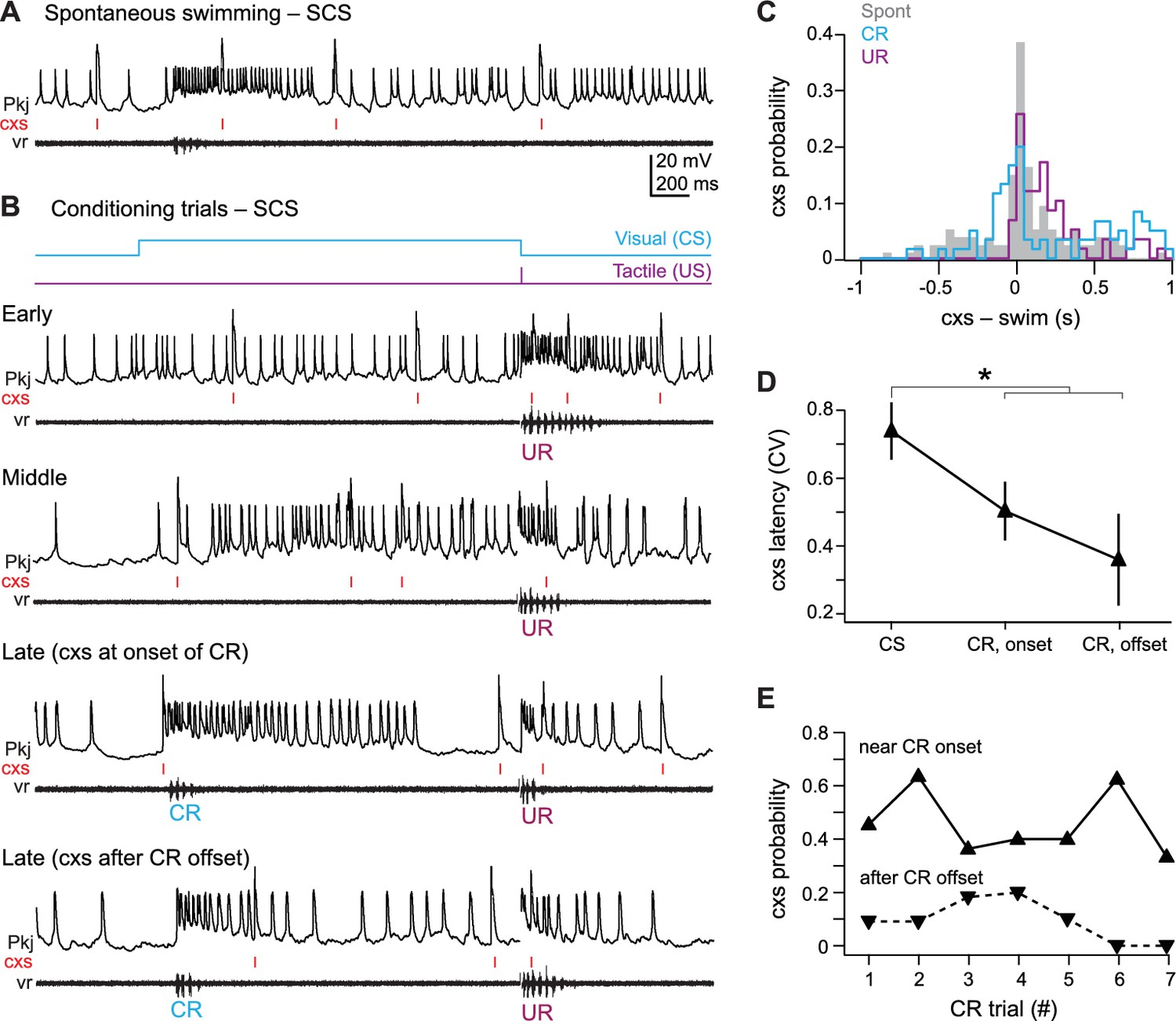 Distinct Responses Of Purkinje Neurons And Roles Simple Spikes Fish Foil Circuits Series Parallel Schematics Scs Cell Over The Course Cerebellar Learning