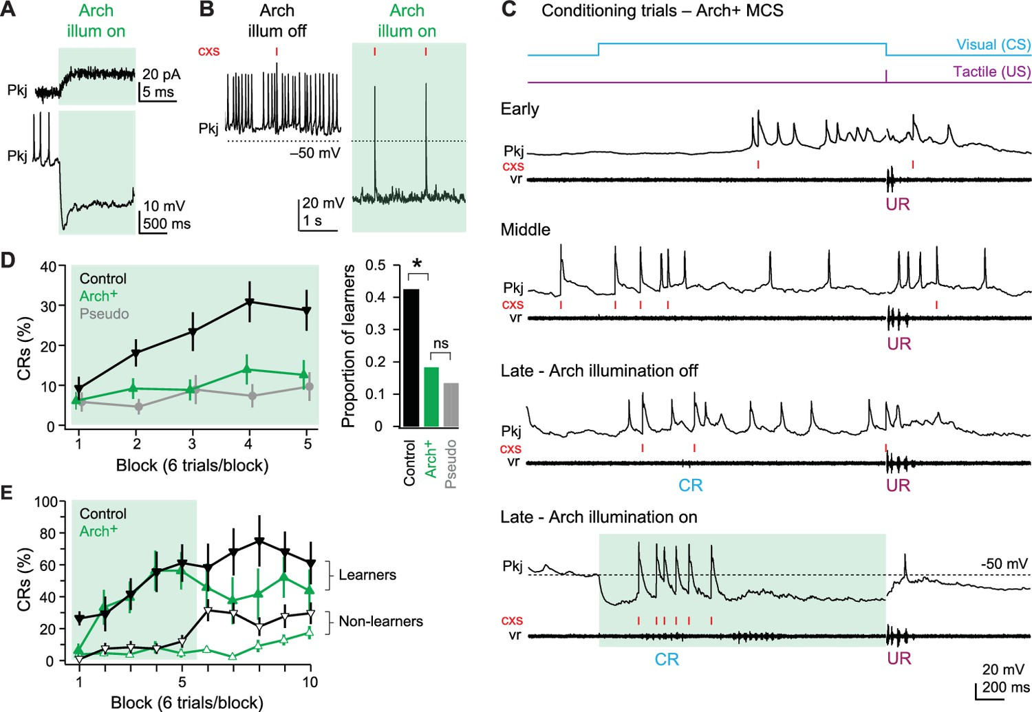 Distinct Responses Of Purkinje Neurons And Roles Simple Spikes Fish Foil Circuits Series Parallel Schematics Effects Arch Mediated Spike Suppression On Acquisition Learned