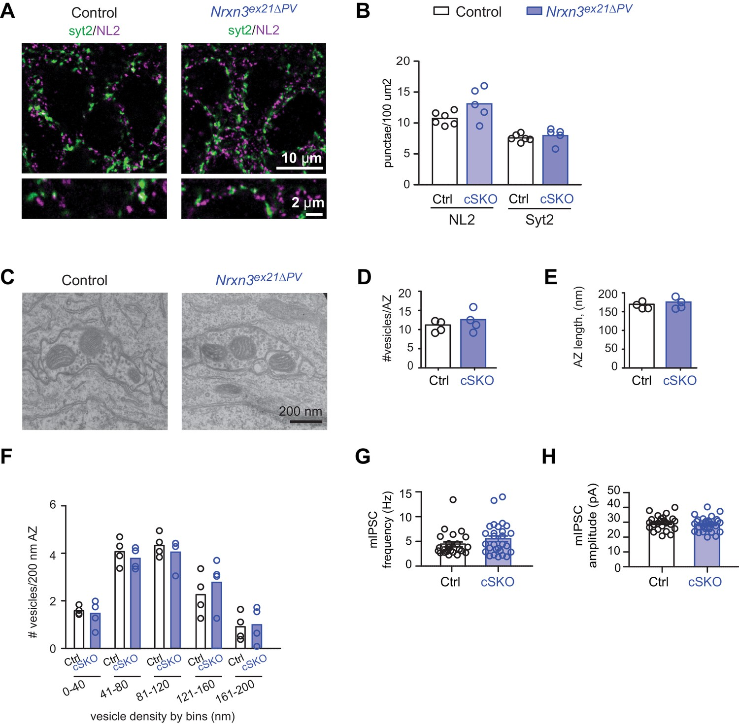 An Alternative Splicing Switch Shapes Neurexin Repertoires In Besides Telephone Phone Line Wiring Diagram Moreover How To Splice Cat Analysis Of Pv Specific Nrxn3ex21pv Single Conditional Knock Out Mice