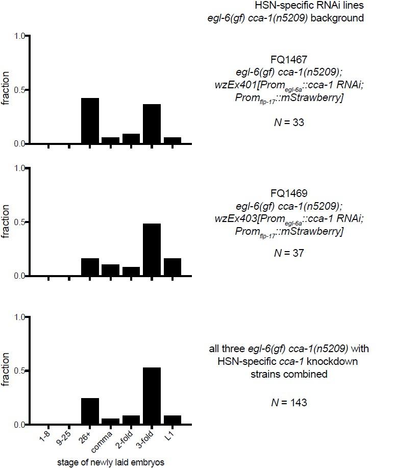 Inhibitory peptidergic modulation of C  elegans serotonin