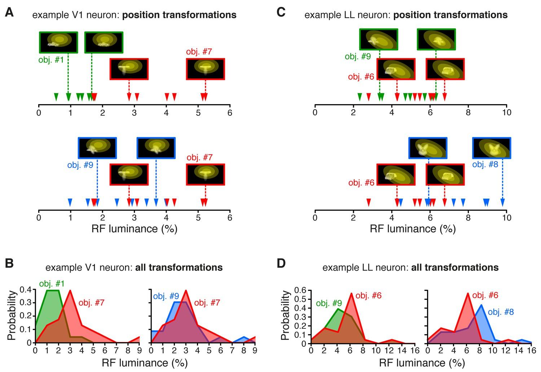 Emergence of transformation-tolerant representations of
