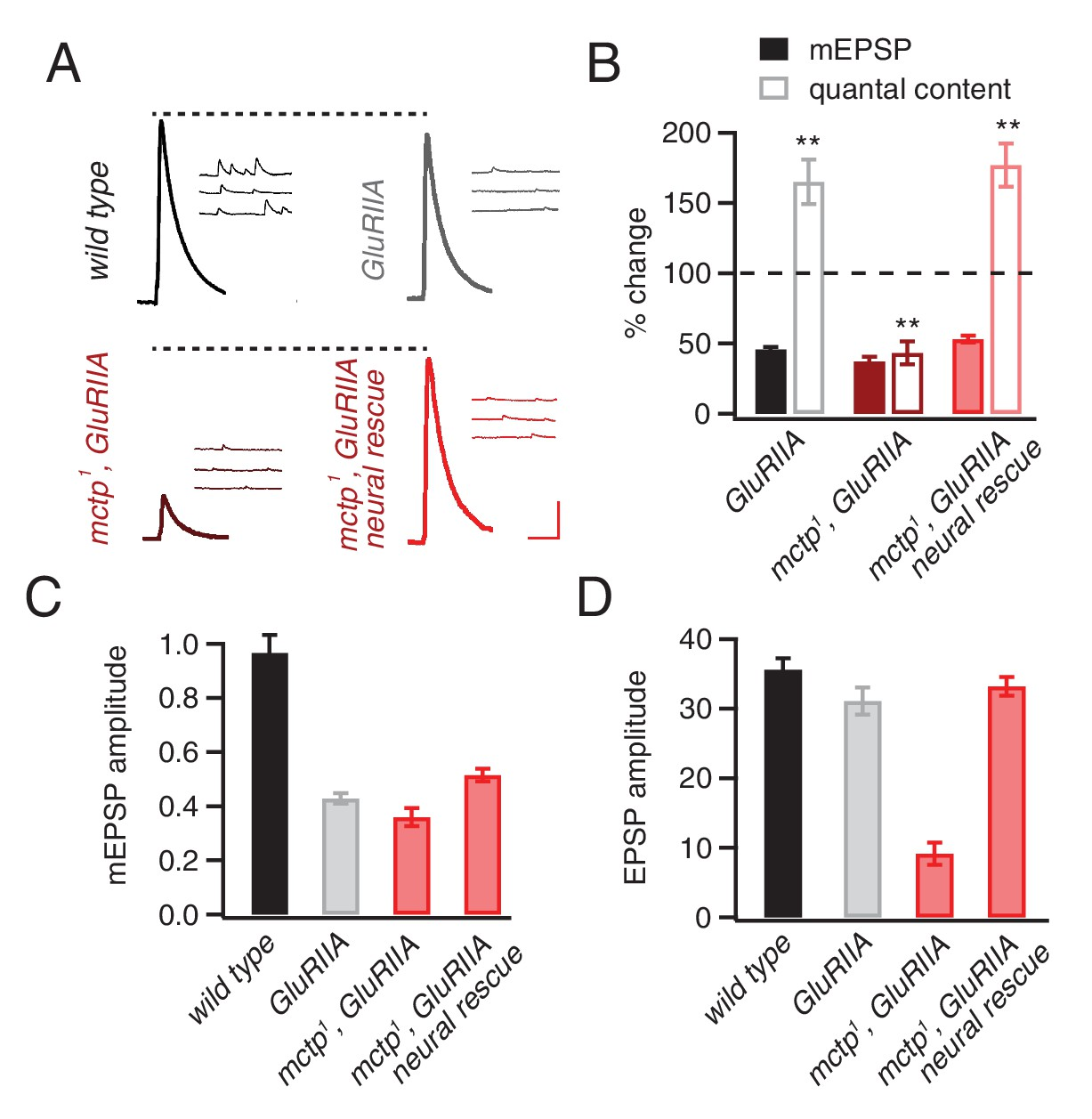 Mctp Is An Er Resident Calcium Sensor That Stabilizes Synaptic Parallelcombinationcircuits Whatisseriesparallelcircuitphp Necessary For The Sustained Expression Of Homeostasis