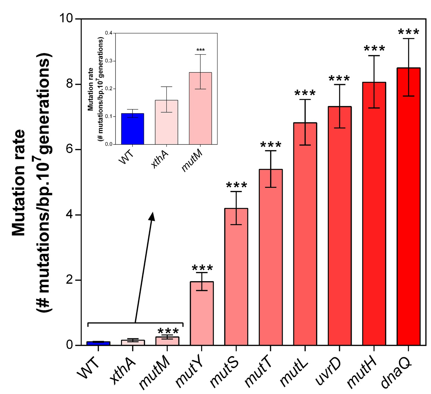 Deletion of selected mutator genes causes increased mutation rates under  normal growth conditions. 2f8a8098991
