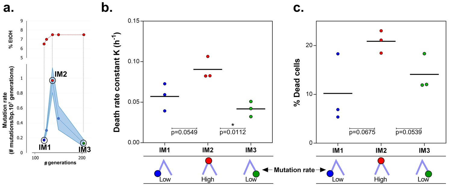 Adaptive Tuning Of Mutation Rates Allows Fast Response To Lethal Taylor Dunn Et 3000 Wiring Diagram Mortality Is The Cost Hypermutation In Evolved Strains When High Etoh Tolerance Reached