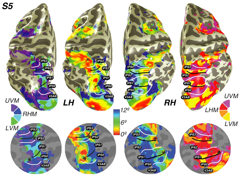 Visual Field Map Clusters In Human Frontoparietal Cortex Elife Visval Echo Khaki Maps Parietal