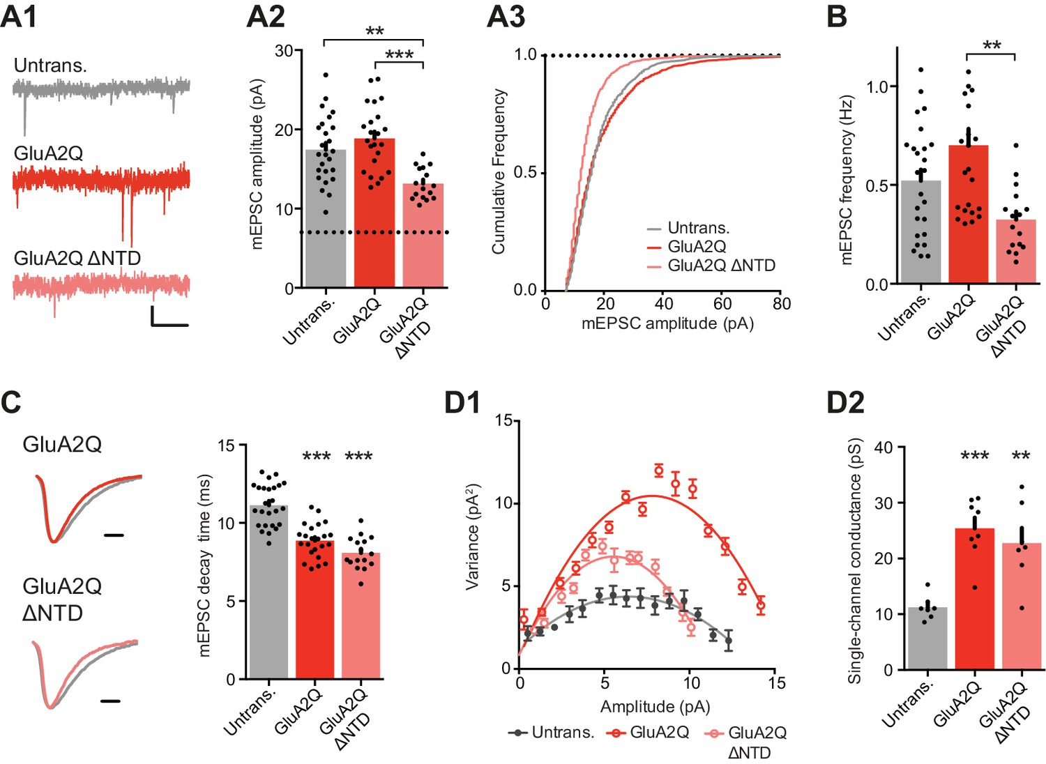 Synaptic Transmission And Plasticity Require Ampa Receptor Anchoring