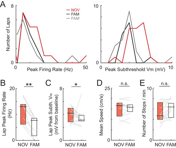 Experience-dependent shaping of hippocampal CA1