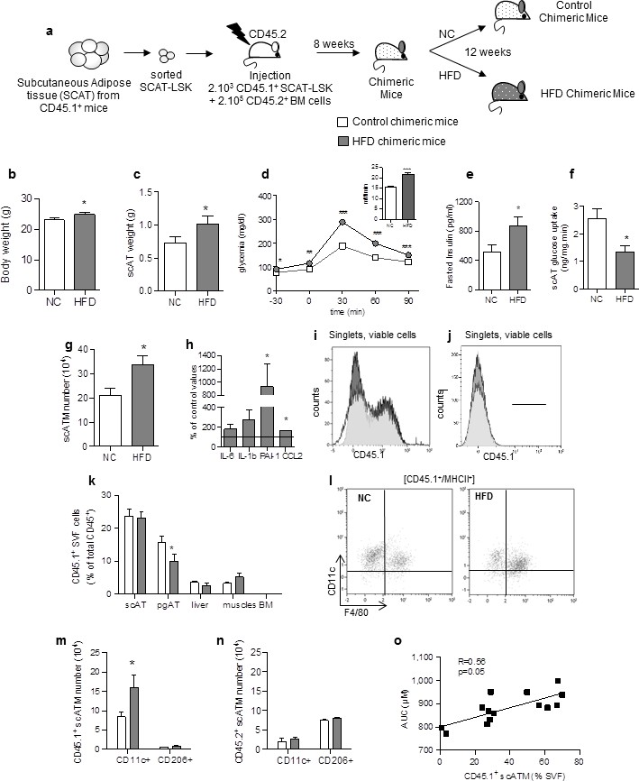 Corrupted Adipose Tissue Endogenous Myelopoiesis Initiates Diet