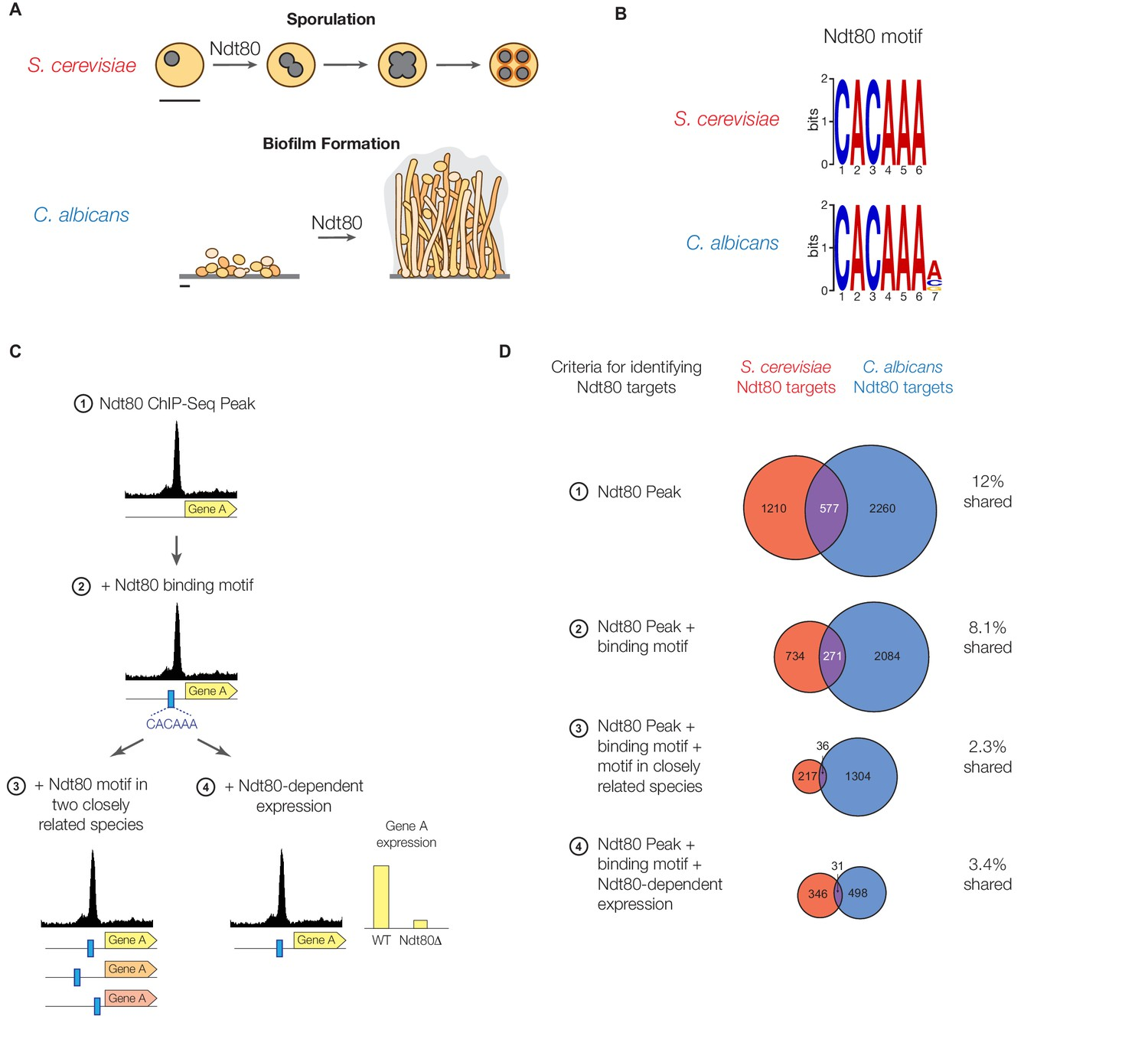 Gene Regulatory Network Plasticity Predates A Switch In Function Of The Above Circuit When Toggle Is Open As Shown 12 Download Asset