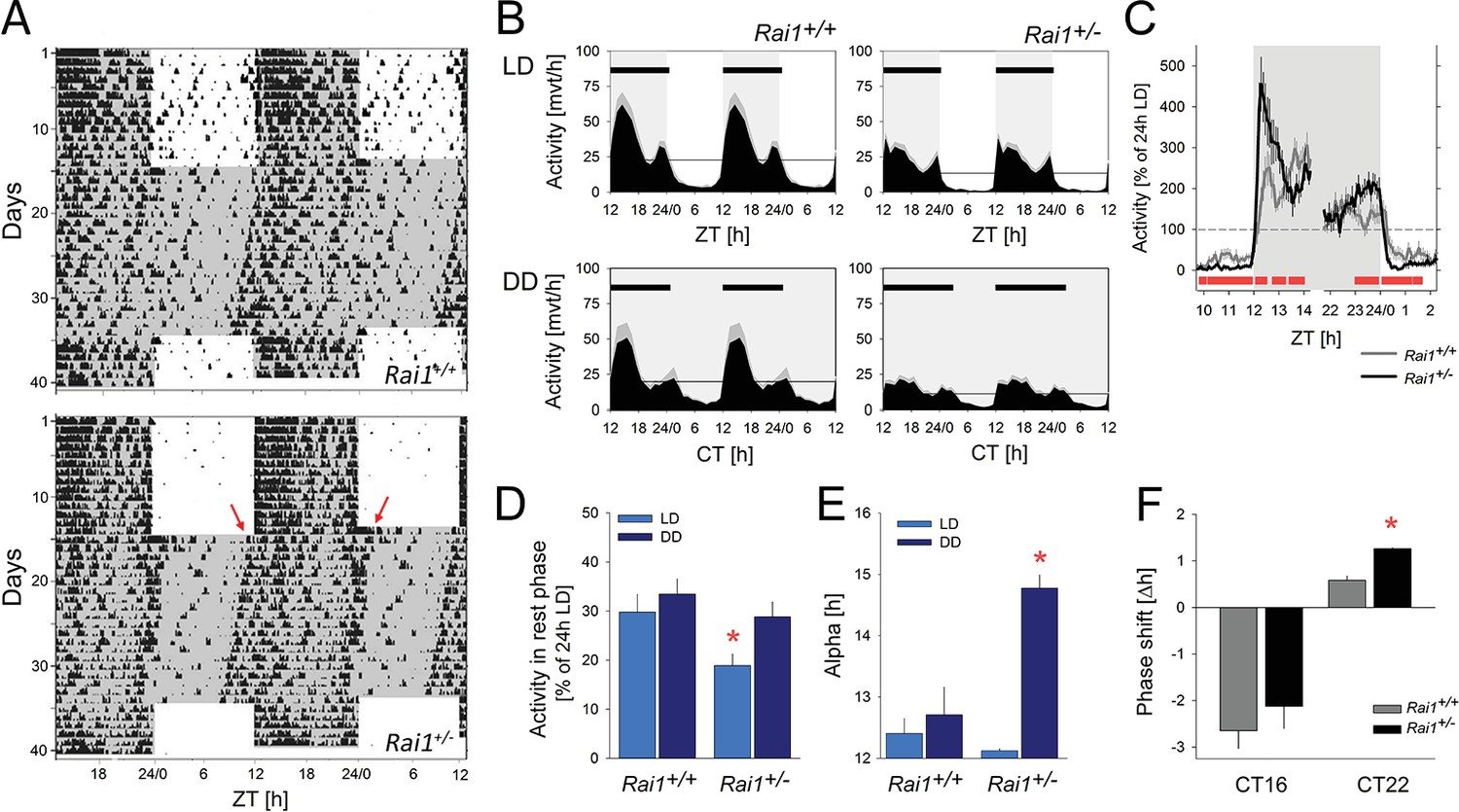 Rai1 frees mice from the repression of active wake behaviors