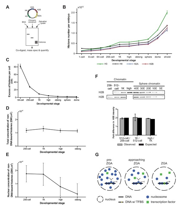 Competition Between Histone And Transcription Factor