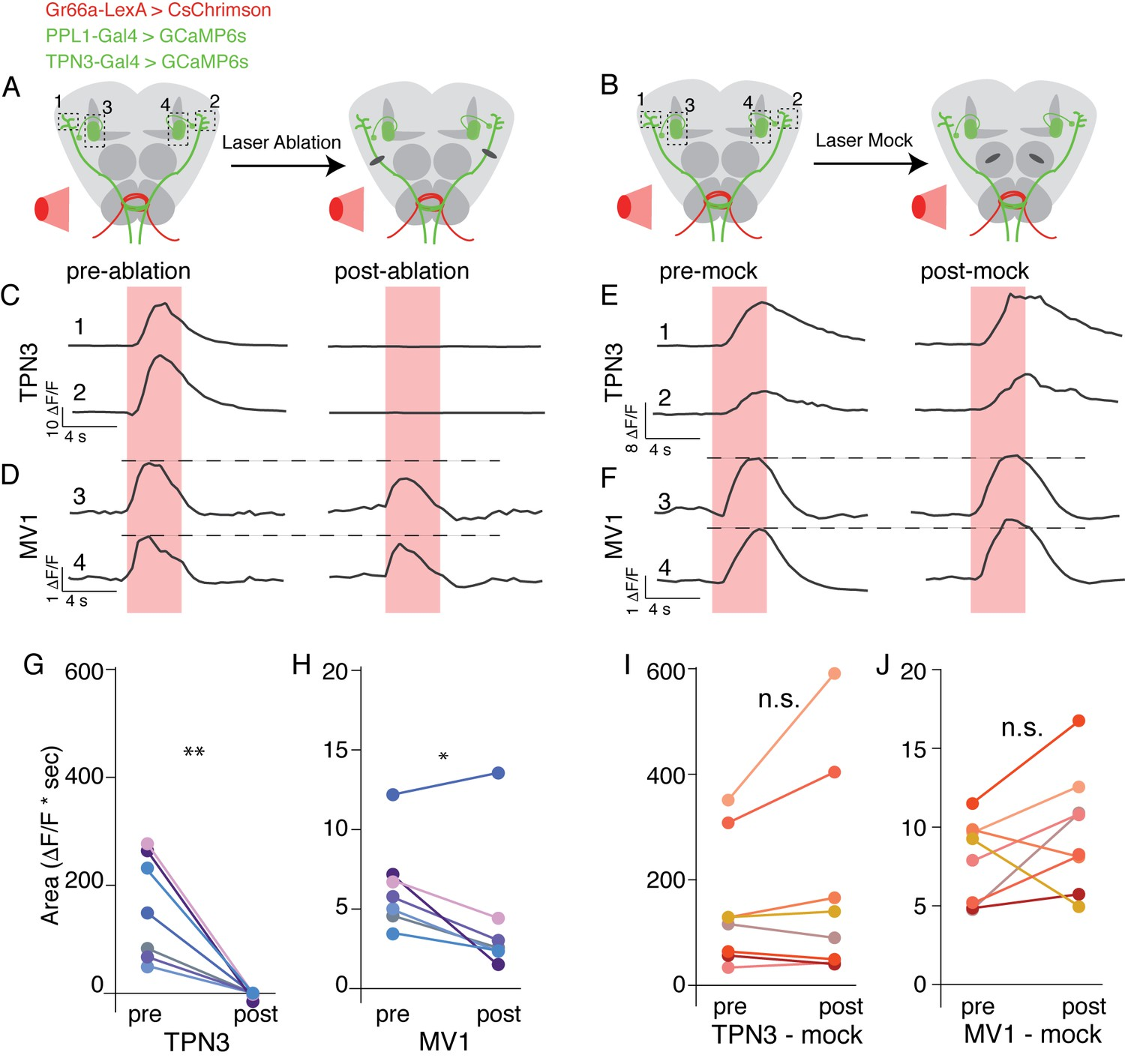 Long Range Projection Neurons In The Taste Circuit Of Drosophila Elife Besides Dish Work Rf Modulator On Wiring Diagram Tpn3 Is Not Only Relay For Bitter Information To Mushroom Bodies