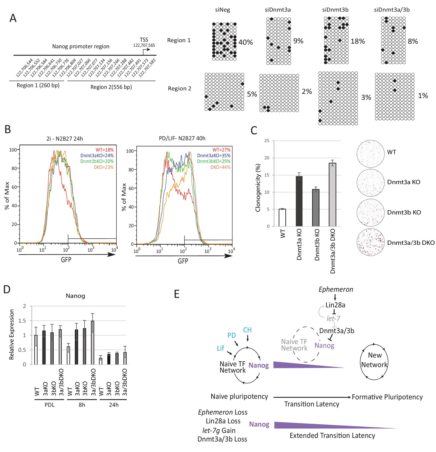 A Lncrna Fine Tunes The Dynamics Of Cell State Transition Wiring 3 Way Switch With 122 Loss Dnmt3a And Dnmt3b Delays Nave Exit Associated Transient Persistence Nanog Expression