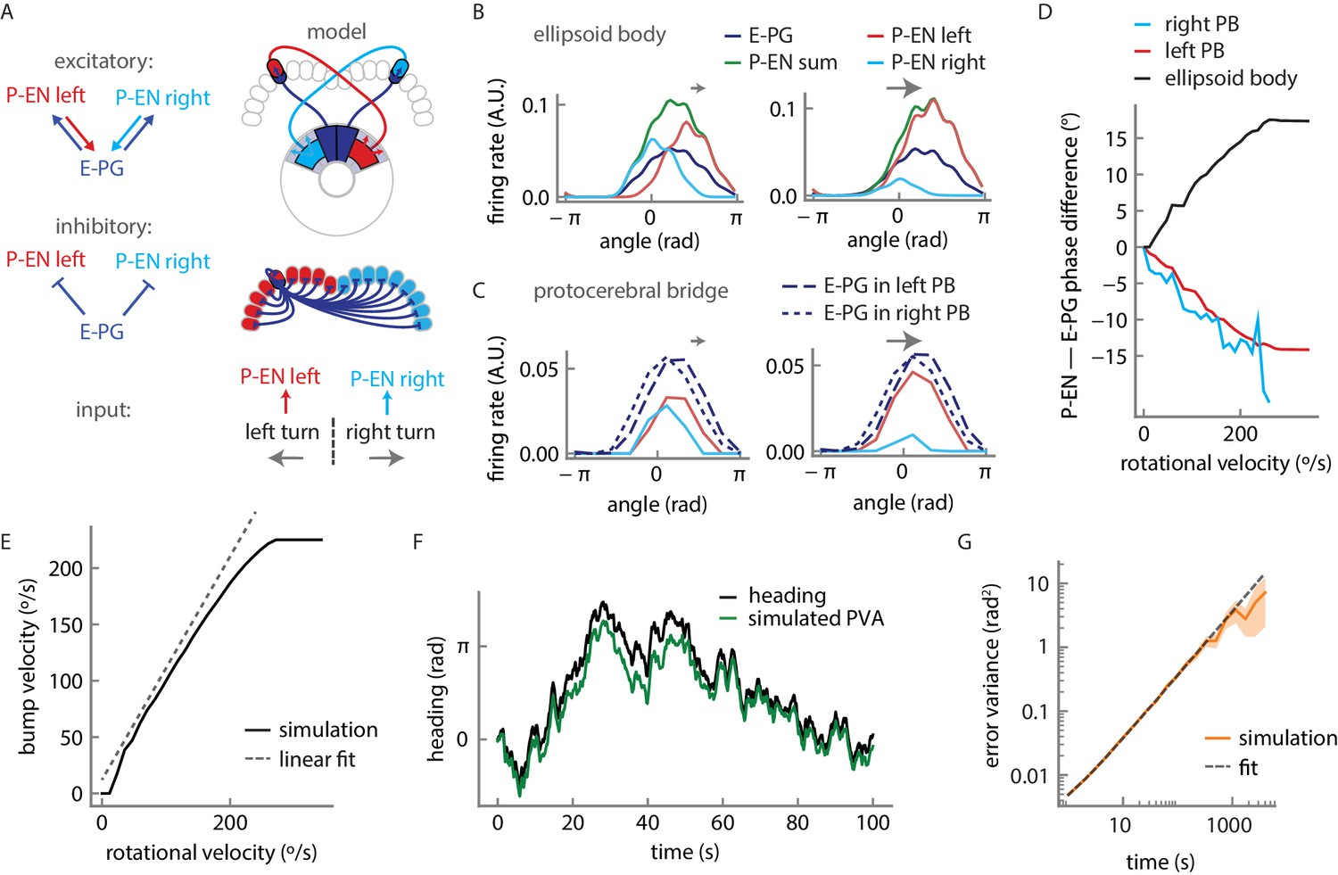 Angular Velocity Integration In A Fly Heading Circuit Elife Donut Ct Wiring Diagram Firing Rate Model For Mechanism Displaying Persistent Localized Activity And