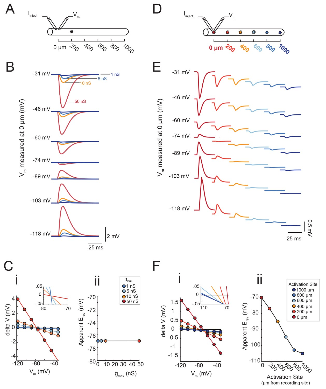 When Complex Neuronal Structures May Not Matter Elife Aa One K A Compact Current Voltage Output Integrated Amplifier Passive Cable Simulations Show That Apparent Erev Measurements Are Independent Of Maximal Conductance Gmax And Dependent On The Distance Between