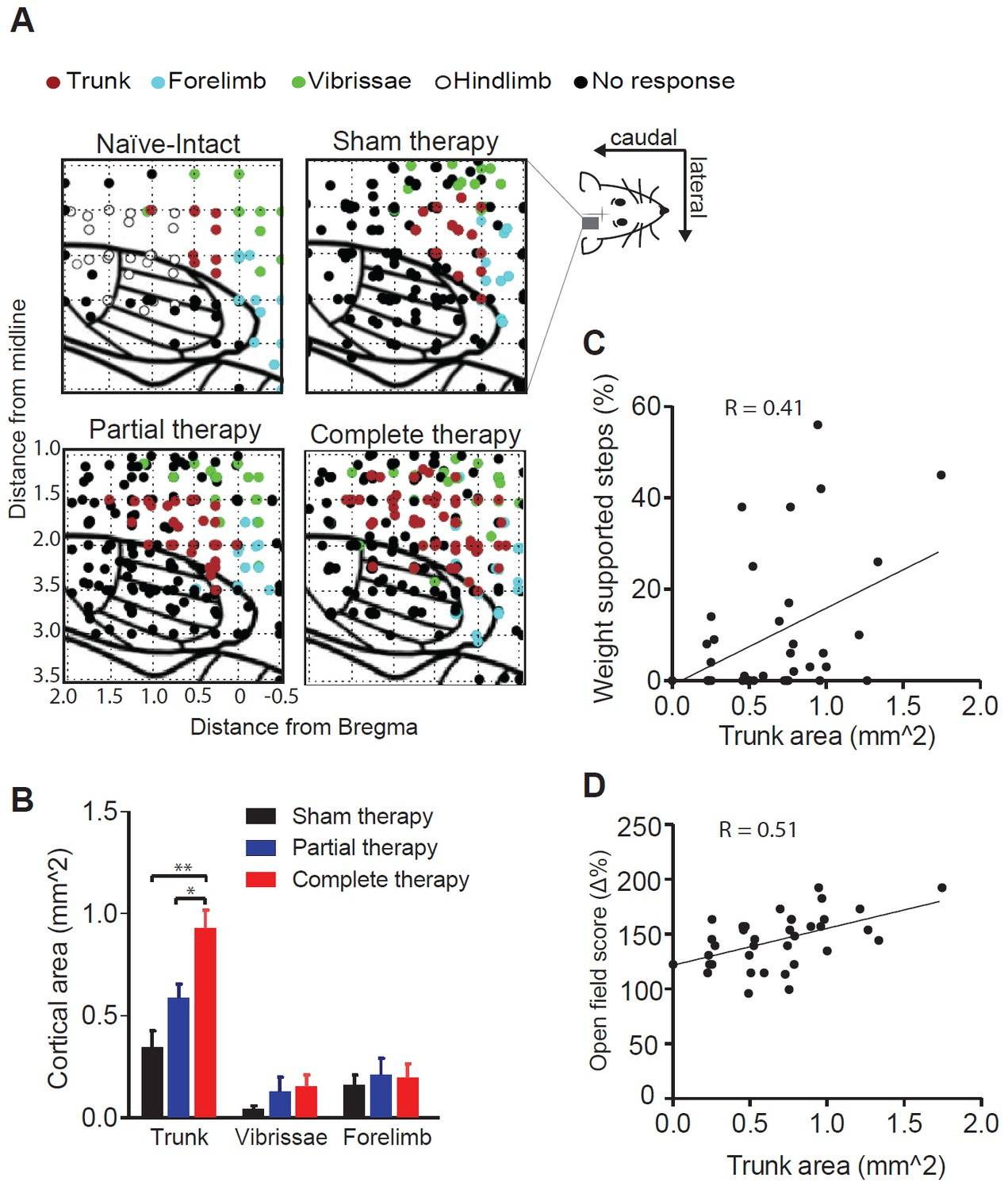 Cortex Dependent Recovery Of Unassisted Hindlimb Locomotion After