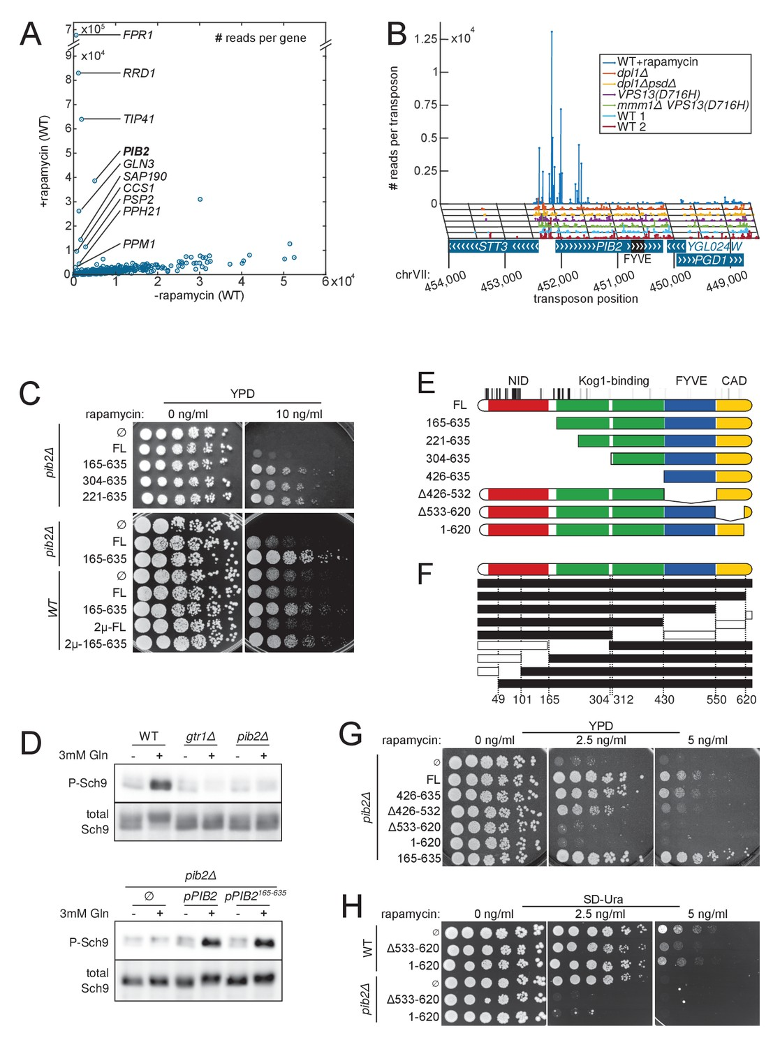 Functional mapping of yeast genomes by saturated transposition | eLife