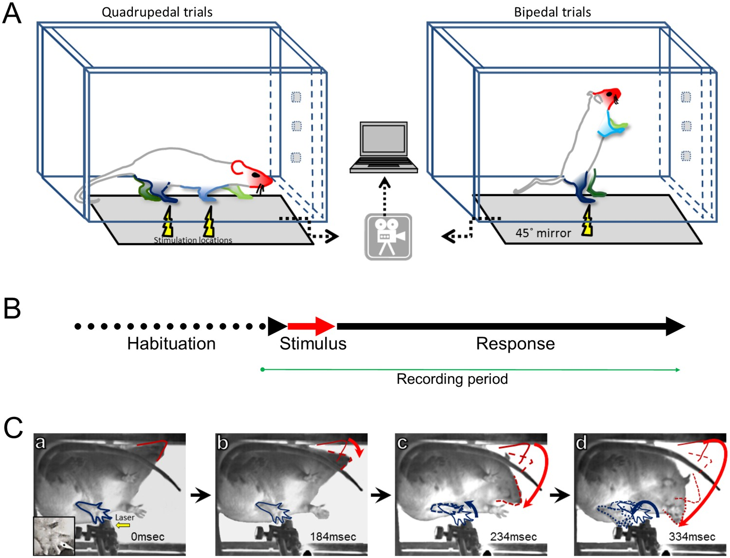 Identification Of A Novel Spinal Nociceptive Motor Gate Control For Randall 102 Central Heating Timer Wiring Diagram Experimental Design And Protocol
