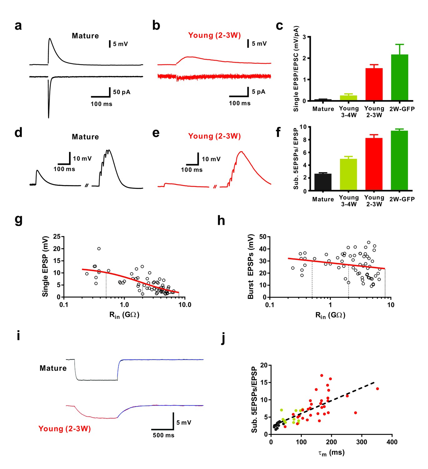 Silent Synapses Generate Sparse And Orthogonal Action Potential Geiger Counter Diagram Chapter 21 Section 5 Efficient Subthreshold Epsp Summation In Newborn Young Granule Cells
