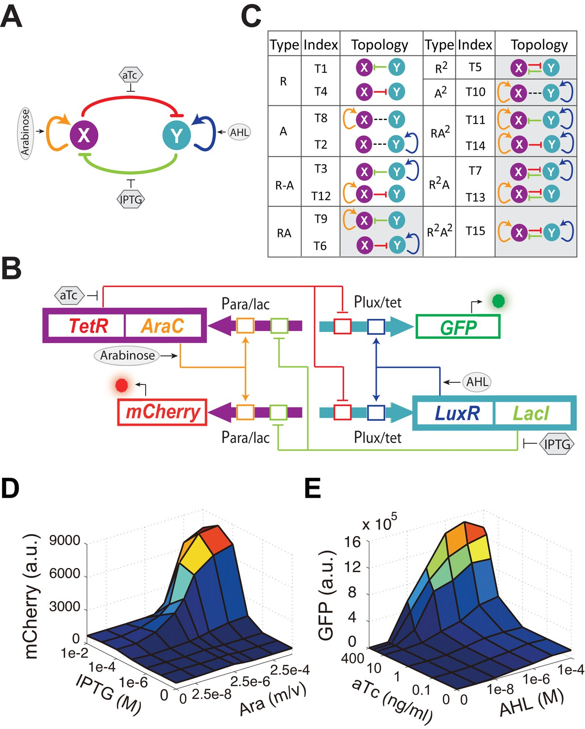 Figures and data in Engineering of a synthetic quadrastable gene