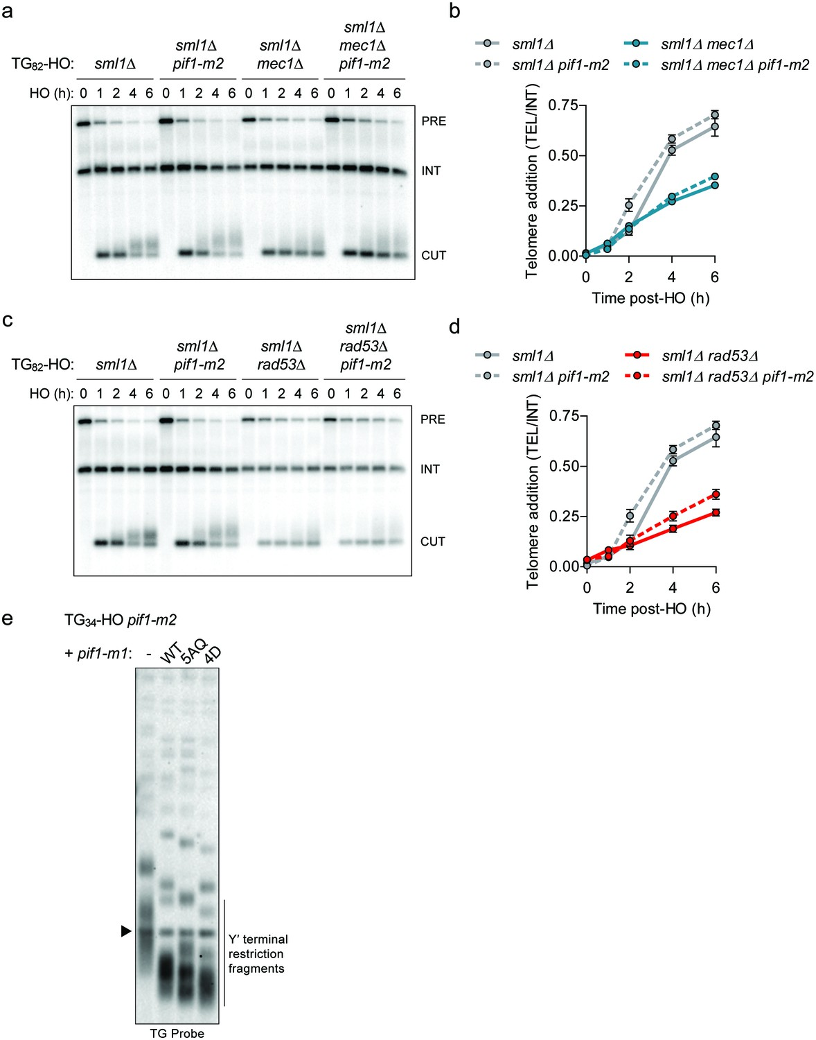 A sharp Pif1-dependent threshold separates DNA double-strand