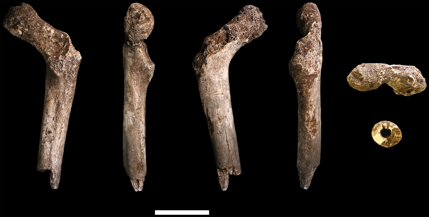 New fossil remains of Homo naledi from the Lesedi Chamber