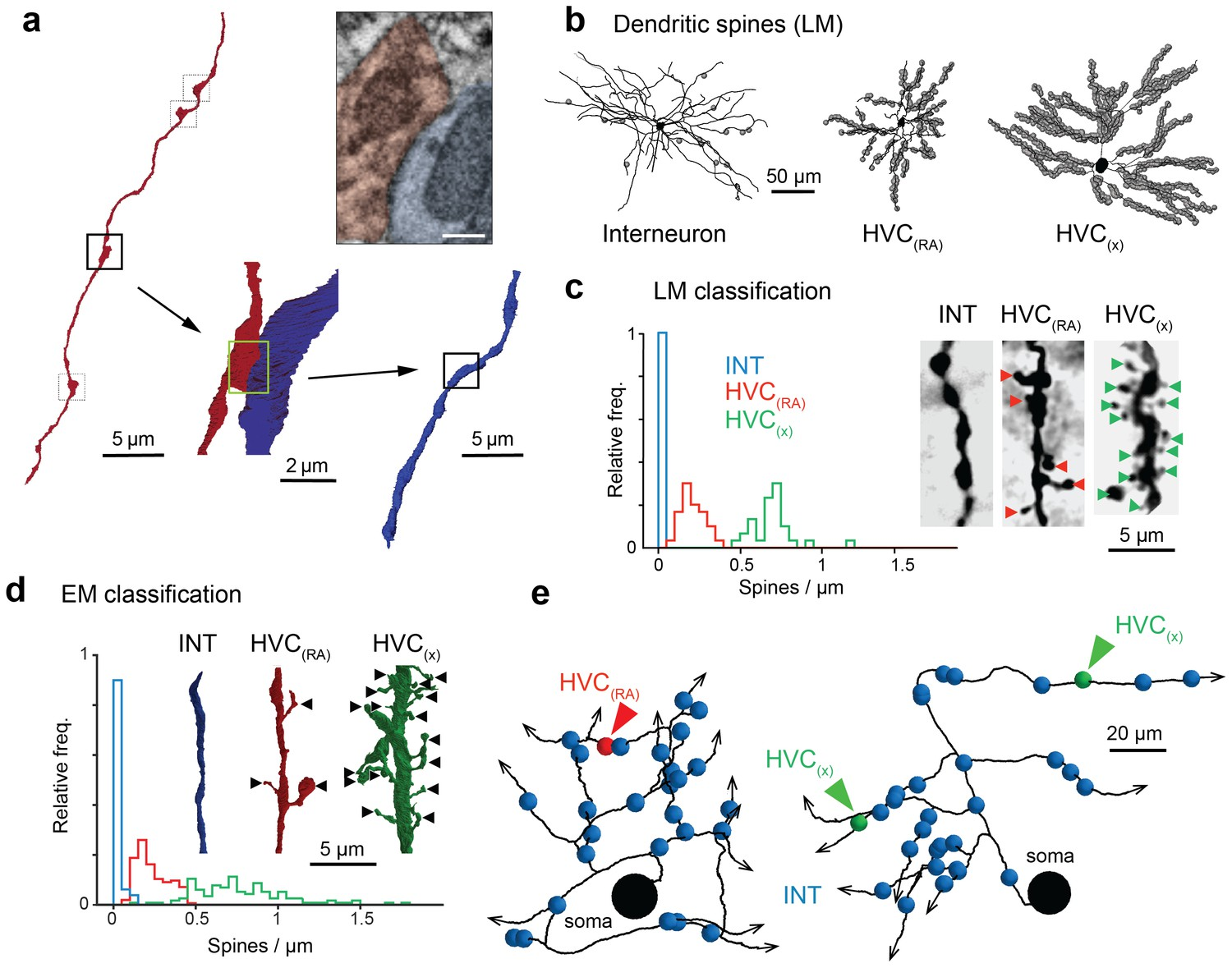 Em Connectomics Reveals Axonal Target Variation In A Sequence Pacer Light Bar Wiring Diagram Classification Of Postsynaptic Targets