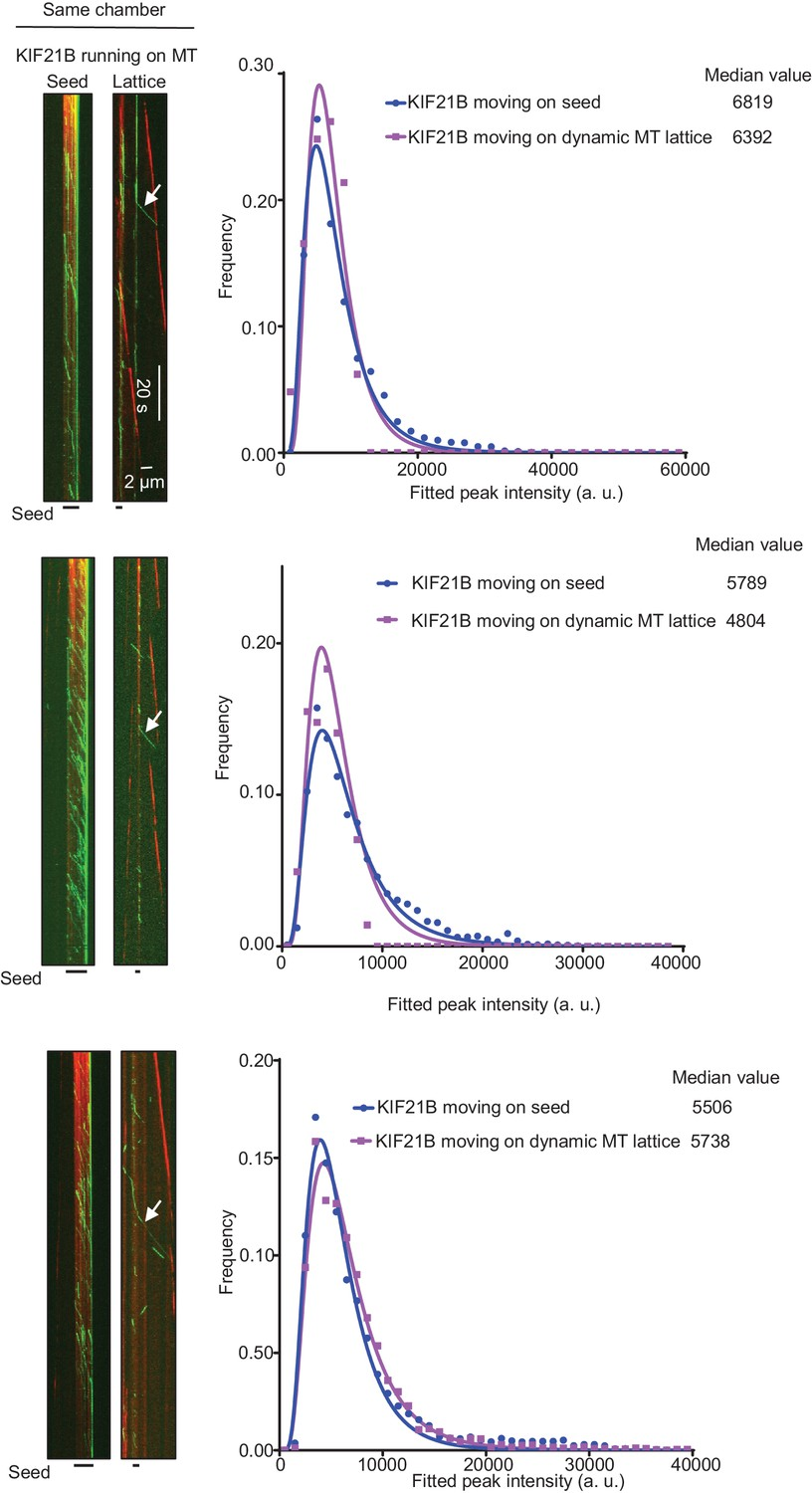 Kinesin 4 Kif21b Is A Potent Microtubule Pausing Factor Elife