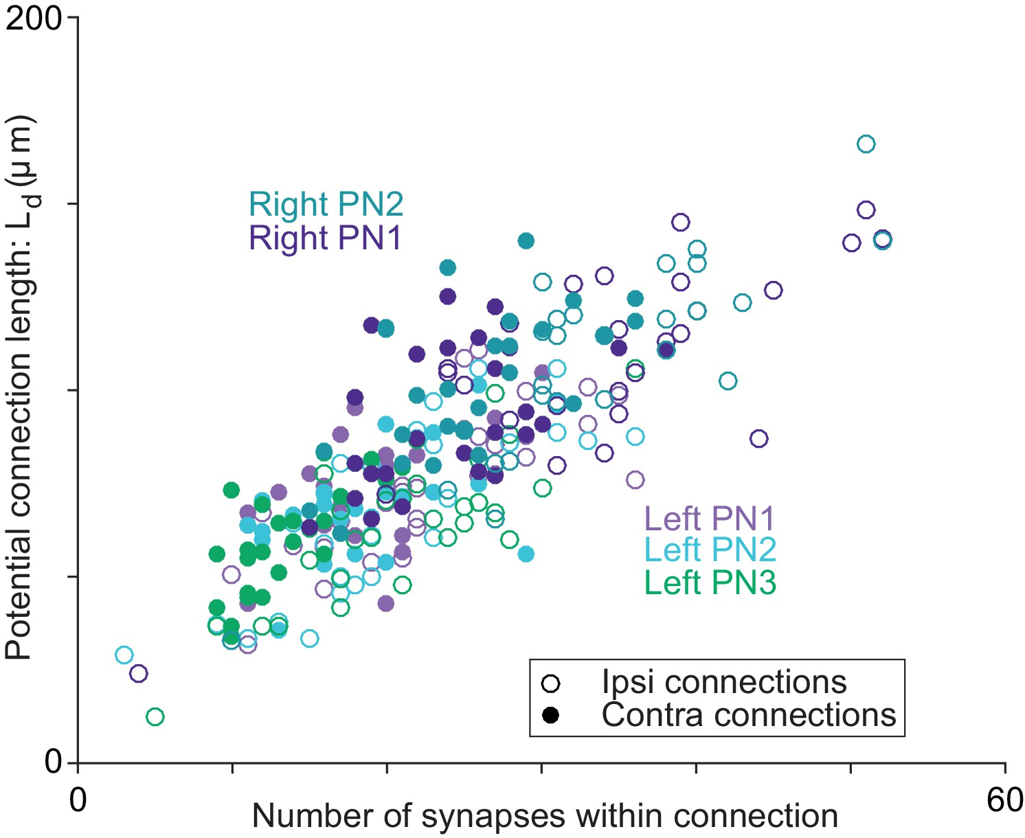 Wiring Variations That Enable And Constrain Neural Computation In A This Simple Circuit Enables You To Listen Your Heartbeat For Axon Dendrite Proximity Correlates With The Number Of Synapses Per Ornpn Connection