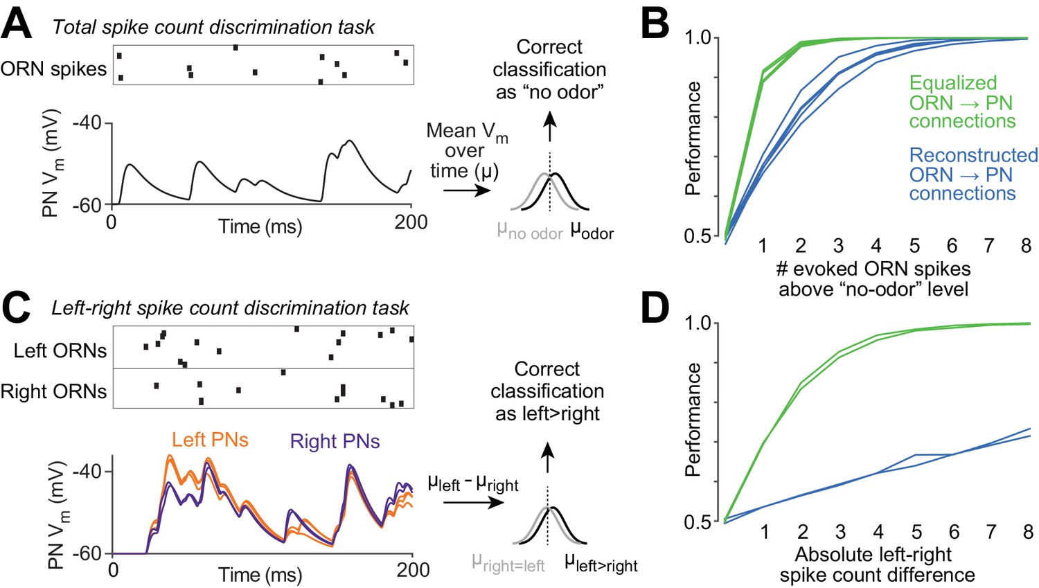 Wiring Variations That Enable And Constrain Neural Computation In A Network Patterns Diagram Reference Functional Consequences Of Variability Orn