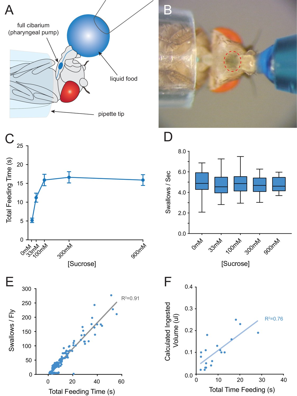 A Receptor And Neuron That Activate Circuit Limiting Sucrose 26 Ring Counter Logic Diagram B Timing Consumption Of In Modified Pharyngeal Pumping Assay