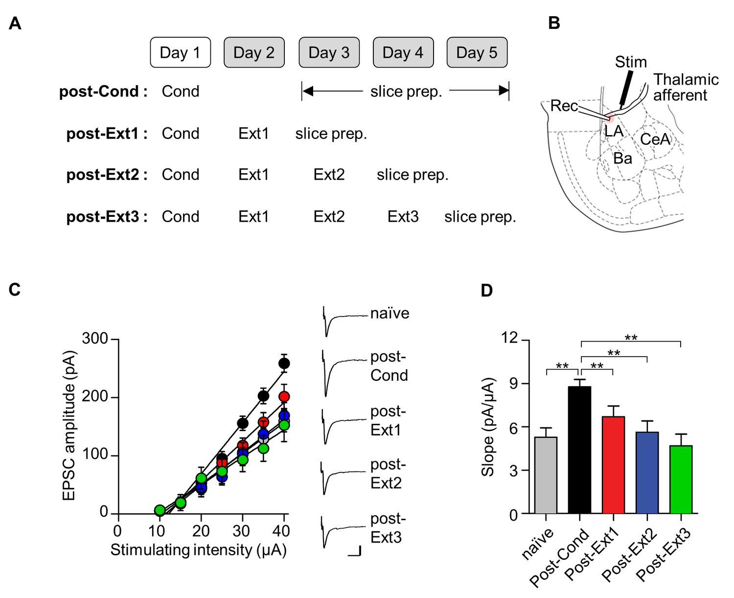 Amount of fear extinction changes its underlying mechanisms elife conditioning induced synaptic potentiation at t la is depotentiated after single or multiple session extinction training nvjuhfo Choice Image