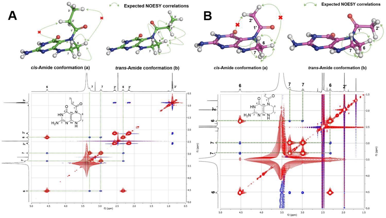 Genome mining unearths a hybrid nonribosomal peptide synthetase-like