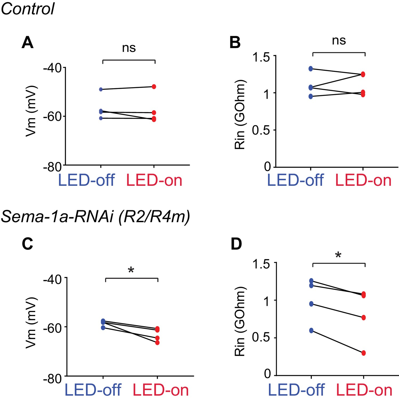 The Laminar Organization Of Drosophila Ellipsoid Body Is Hopkins 6 24 Wiring Diagram Electrophysiological Characterization R3 And R2 R4m Axon Inhibition