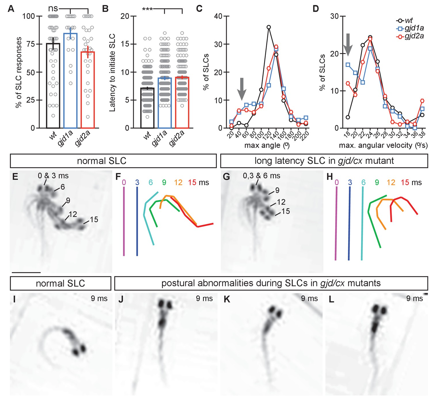 A Genetic Basis For Molecular Asymmetry At Vertebrate Electrical Singer 15 91 Wiring Diagrams Gjd1a Cx341 And Gjd2a Cx355 Mutants Have Delayed Abnormal Escape Responses