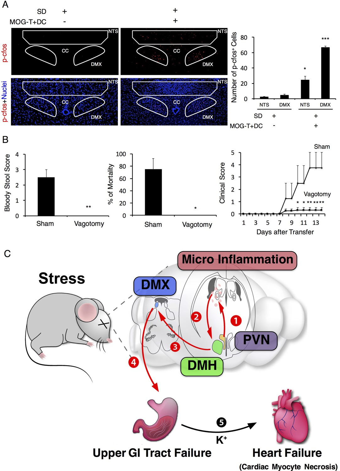 Brain Micro Inflammation At Specific Vessels Dysregulates