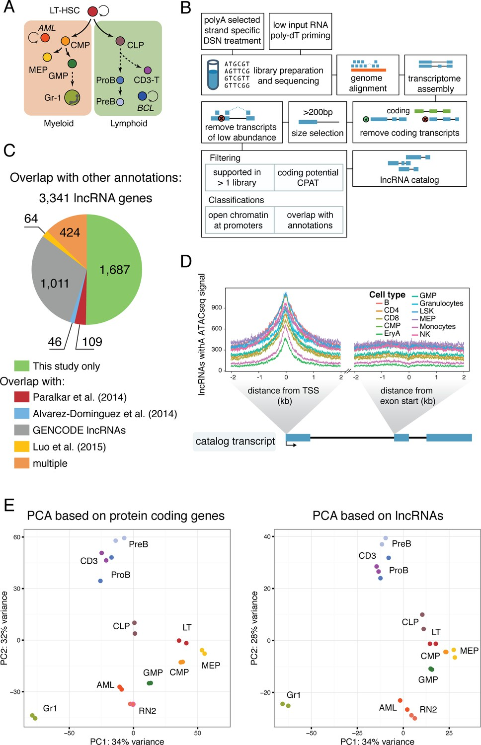 lncRNA requirements for mouse acute myeloid leukemia and