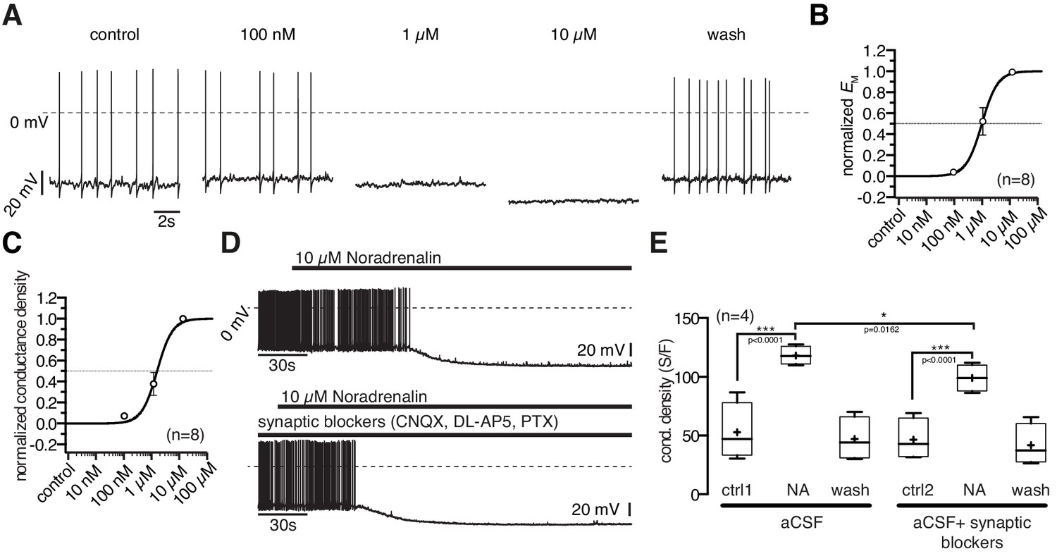 Antagonistic Modulation Of Npy Agrp And Pomc Neurons In The Arcuate Suzuki Gn 125 Electric Circet Pdf Noradrenergic Is Concentration Dependent