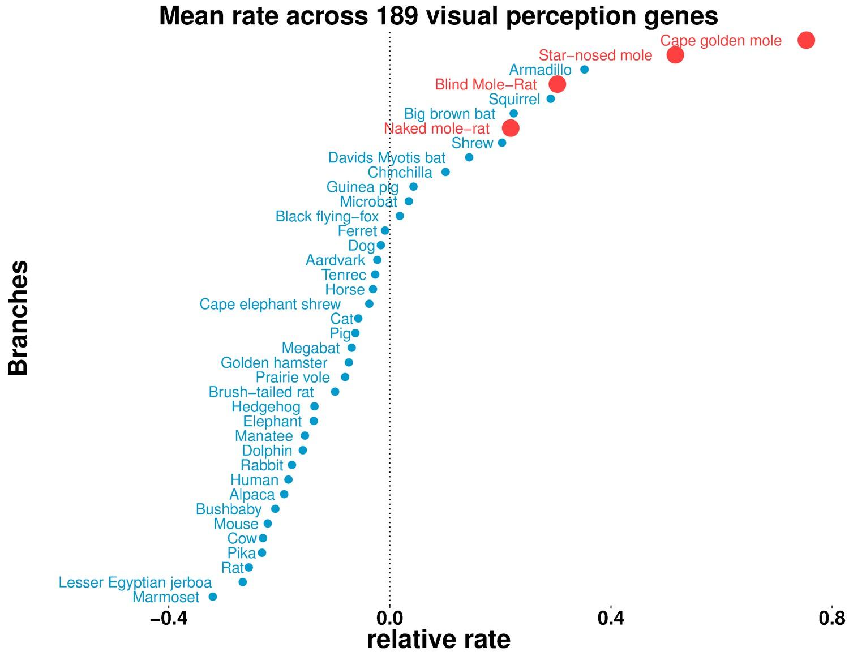 Subterranean Mammals Show Convergent Regression In Ocular Genes And
