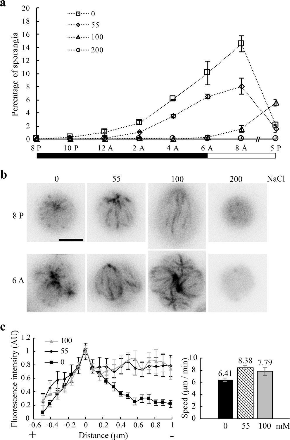 H+- and Na+- elicited rapid changes of the microtubule