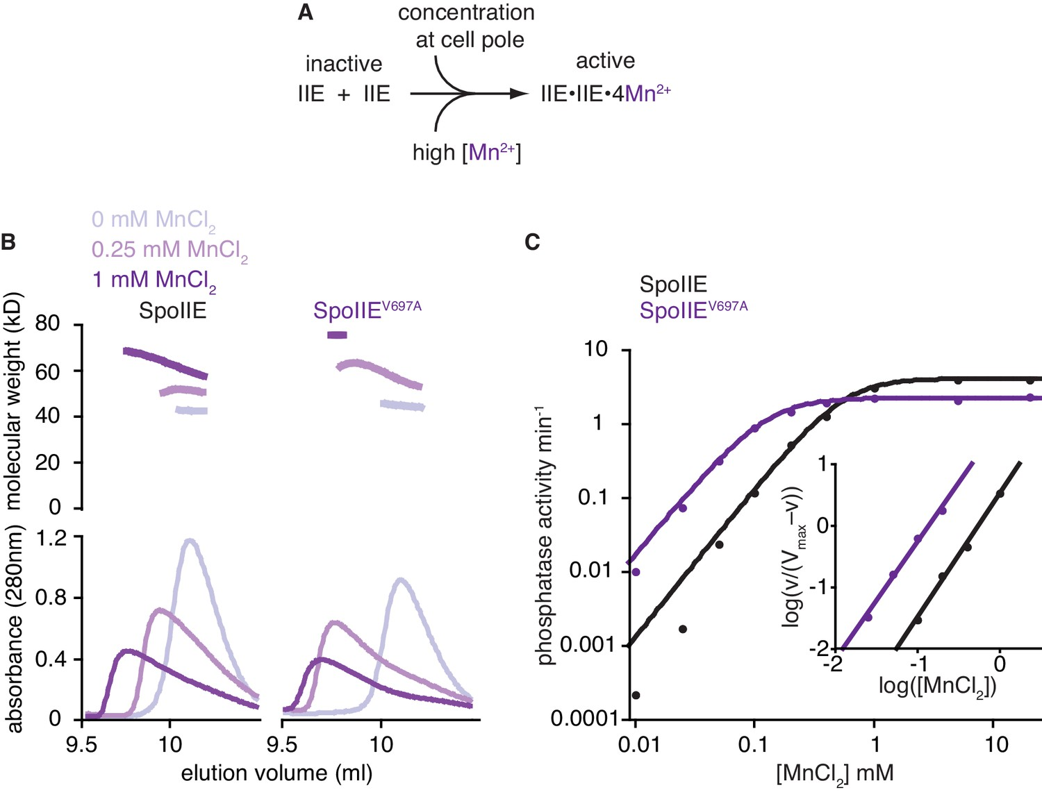 A Widespread Family Of Serine Threonine Protein Phosphatases Shares Pole Diagram Moreover Single Switch With Two Lights On 2 The Promotes Manganese Binding In Phosphatase Active Site
