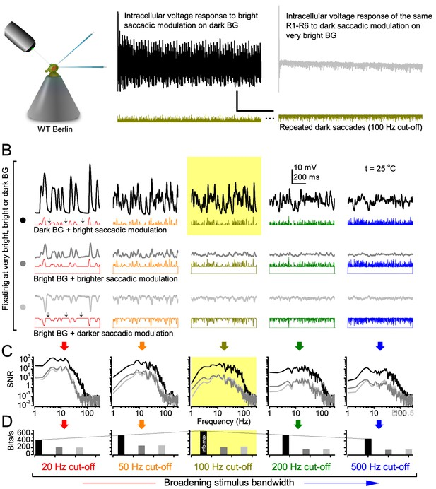 Microsaccadic sampling of moving image information provides