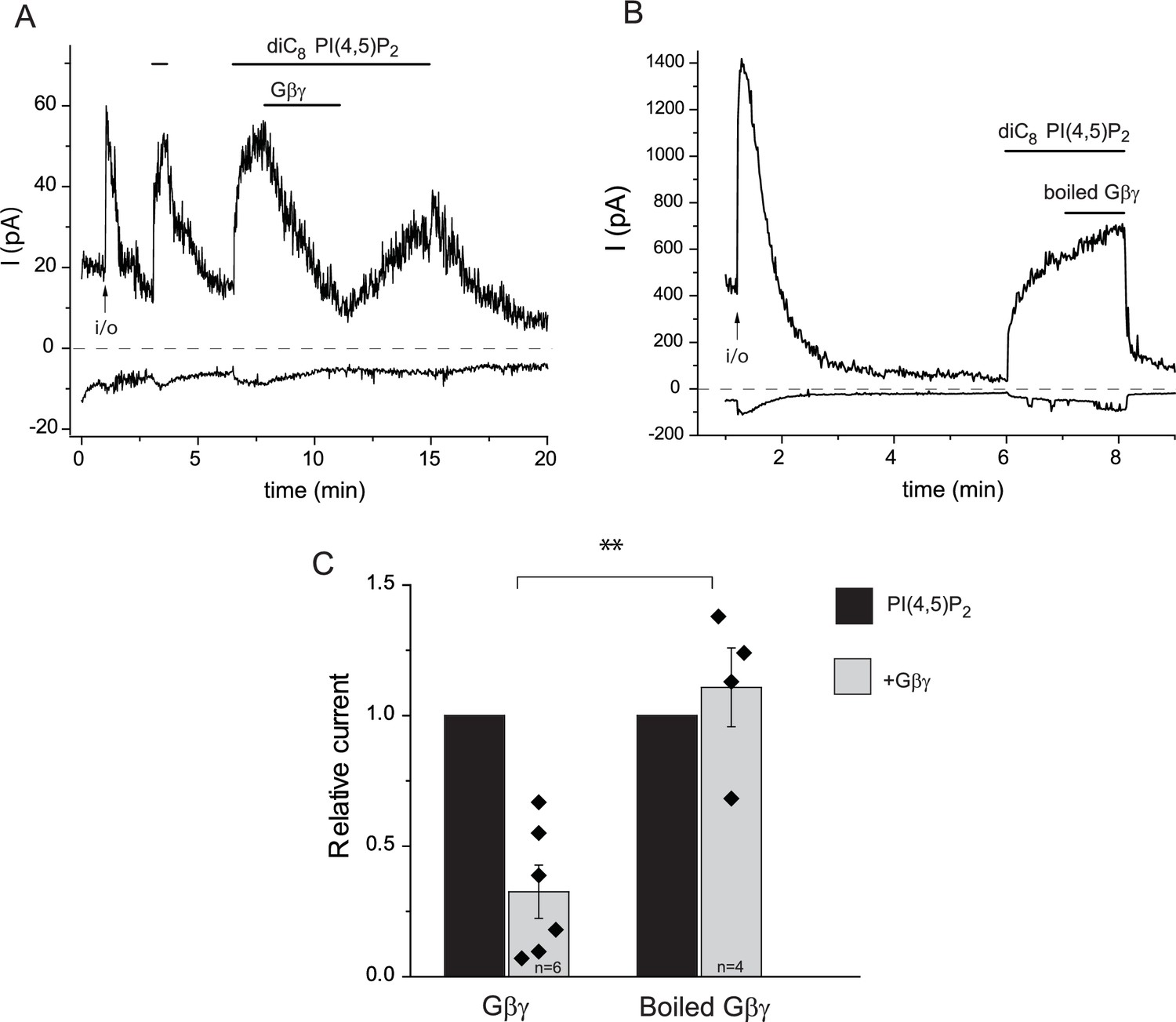 Inhibition Of Transient Receptor Potential Melastatin 3 Ion Channels Still Diagram Rectifying Plant For Purifying Trpm3 In Excised Patches By G Purified From Bovine Brain