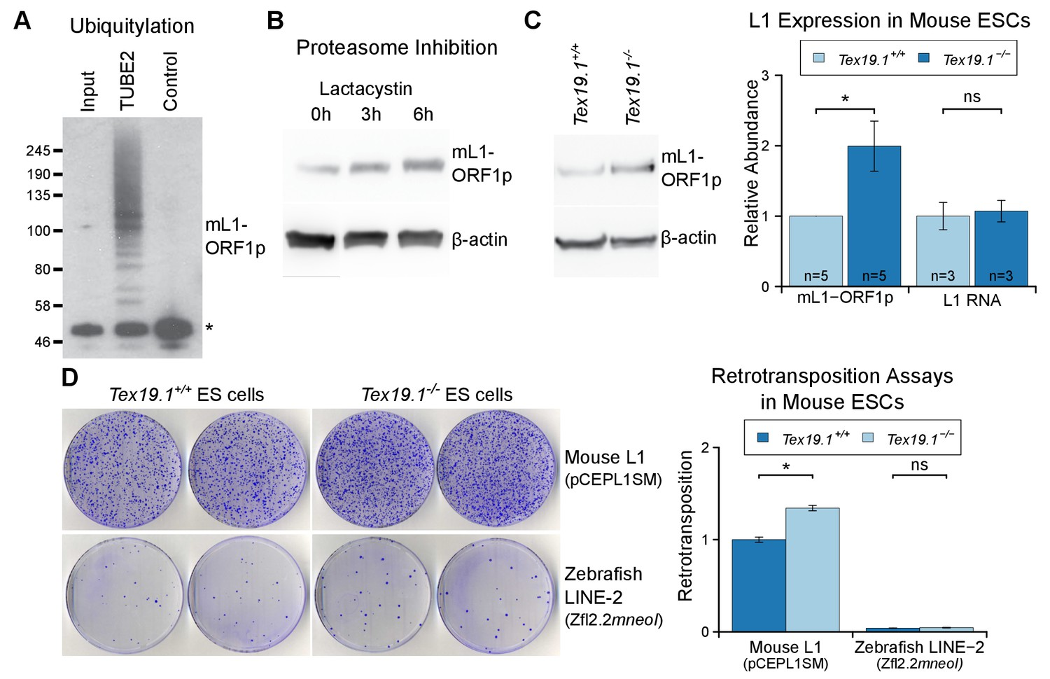 Mobilization of LINE-1 retrotransposons is restricted by